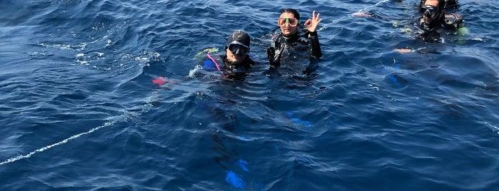Kerbela Diving Port is one of midilli adası.