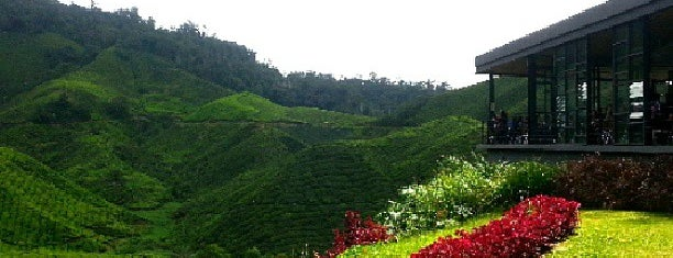 Hilltop @ Boh Tea Factory is one of Cameron Highlands.