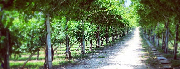 Quinta de Gomariz is one of Wine World.