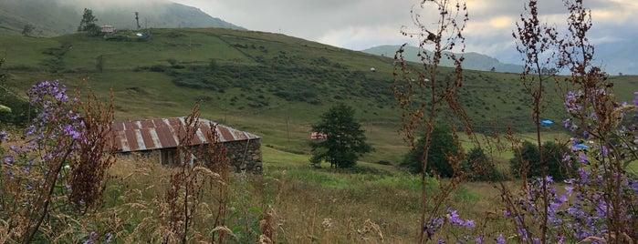 Kiraz Yaylası is one of Karadeniz Yaylaları.