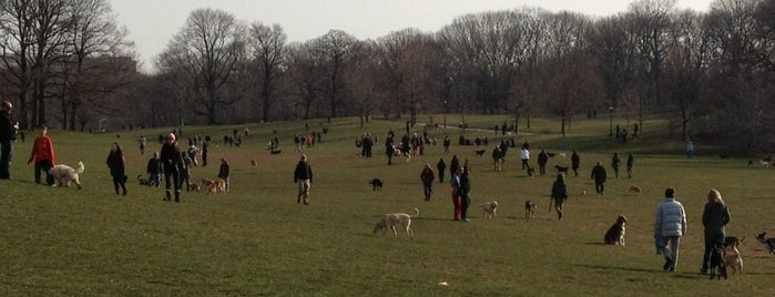 Prospect Park Dog Run is one of Locais curtidos por Ailie.