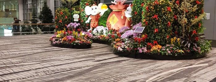 Changi is one of Orte, die Dave gefallen.