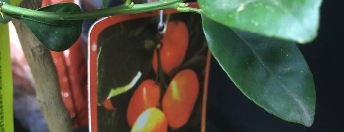Pflanzen-Kölle is one of Orte, die Daniel gefallen.