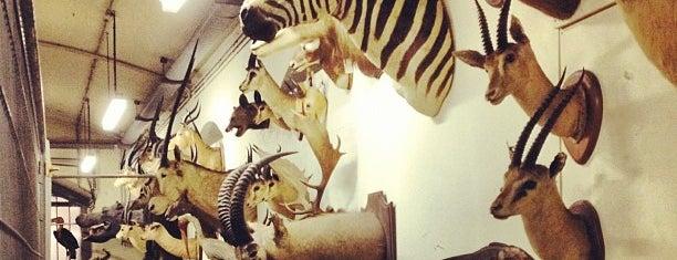 AfricaMuseum is one of Uitstap idee.