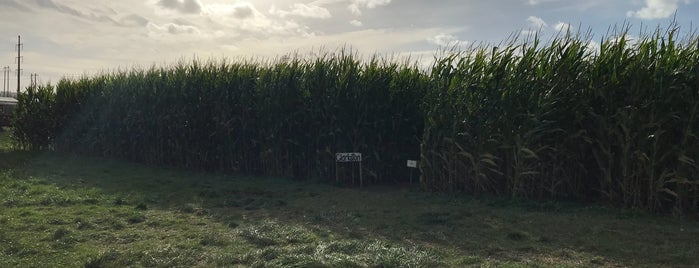 washington state corn maze is one of Been There, Done That.