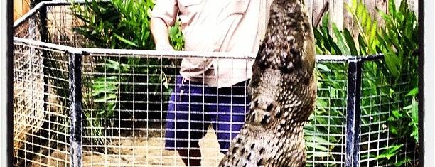 Hartley's Crocodile Adventures is one of Lieux qui ont plu à Matthew.