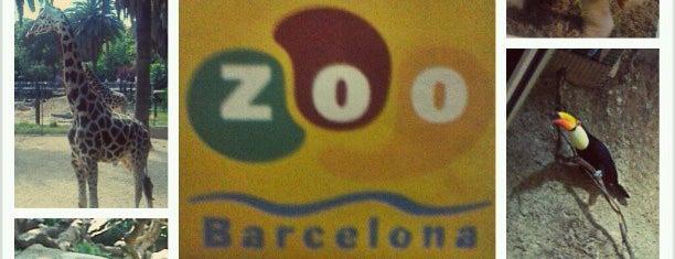 Zoo de Barcelona is one of Barcelona's Best Entertainment - 2013.