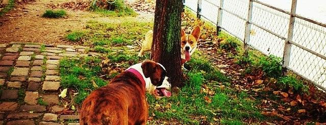 Les parcs et jardins accessibles aux chiens