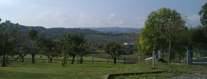 Ozzano Monferrato is one of Lugares favoritos de Maxim.