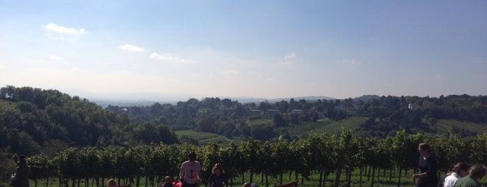 Wiener Weinwandertage is one of Locais curtidos por Karl.