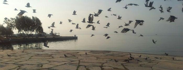 Balıkçı Barınağı is one of Figen 님이 좋아한 장소.