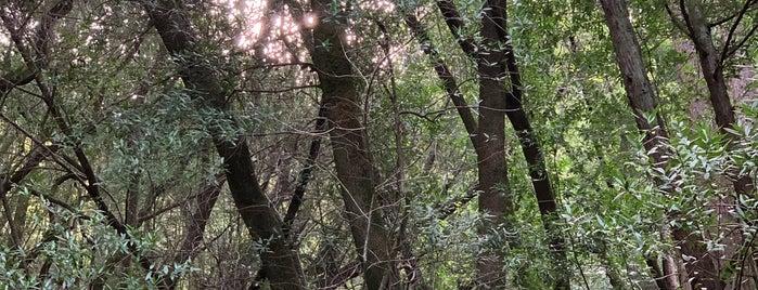 dawn falls trail is one of Locais salvos de Paresh.