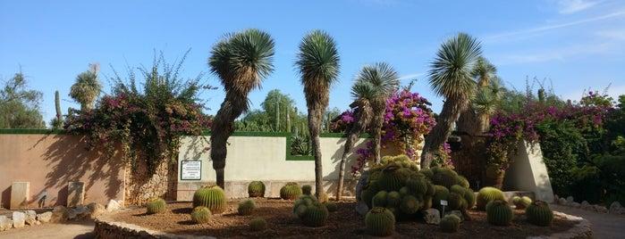 Botanicactus is one of Mallorca.