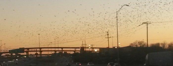 bats is one of Dallas to San Antonio.