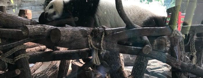 Panda Garden | Zoo Berlin is one of Berlin.