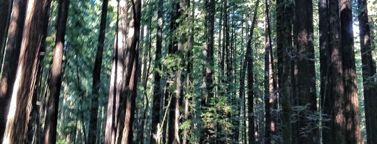 Armstrong Redwoods State Natural Reserve is one of Sebastopol Getaway.