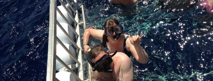 Hawaii Shark Encounters is one of Honolulu.