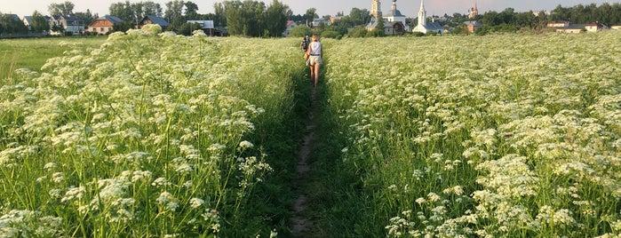 Ильинский луг is one of สถานที่ที่ ирина ถูกใจ.