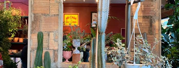 Tula Plants & Design is one of Housing, Furnishing, etc.