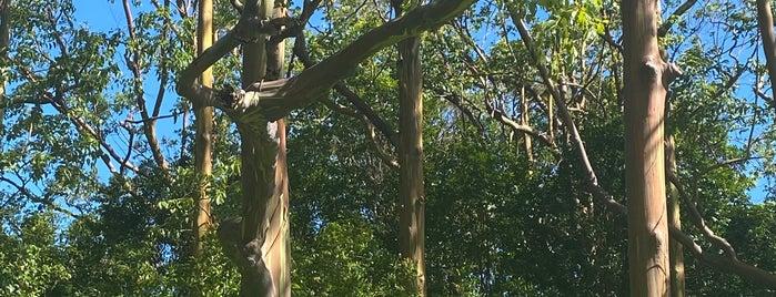 Painted Trees is one of Tempat yang Disukai Vlad.