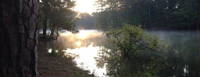 RTM Homestead Loop/Sweet Gum Trail is one of 7 of Atlanta's best running trails.