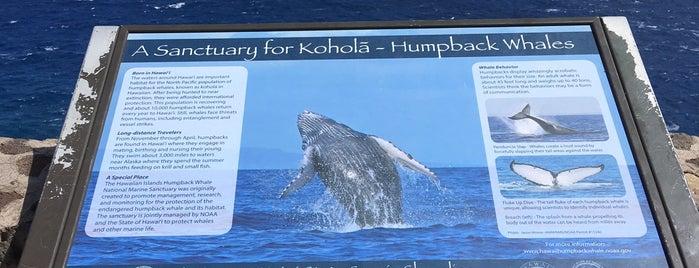 Tidepools at Makapu'u is one of chawaii.