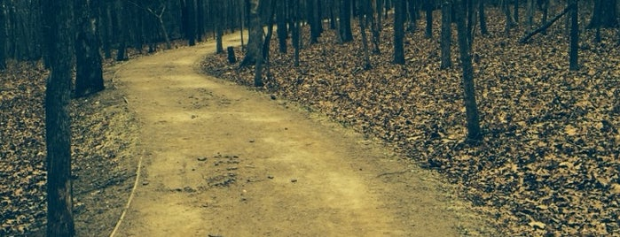 Crystal Bridges Trail is one of Arkansas to do.