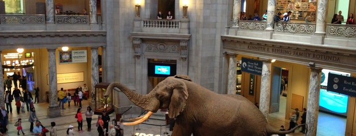 Smithsonian National Museum of Natural History is one of DC.