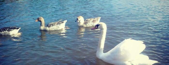 Beletsi Lake is one of Αξίζει σου λέω (Outdoors)!!!.
