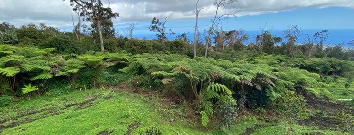 Mountain Thunder Coffee Plantation is one of Big island Hawaii.