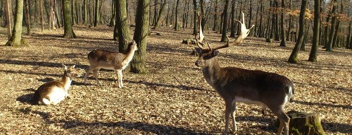 Budakeszi Vadaspark is one of Locais curtidos por Marton.