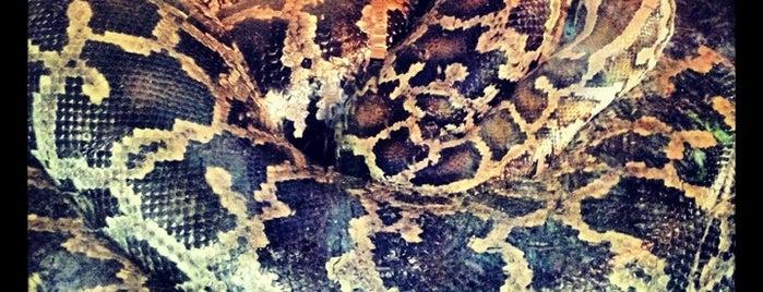 Taman Reptil Bali (Reptile Park) (*my™) is one of Enjoy Bali Ubud.