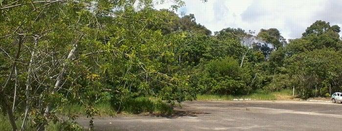 Estação Ecológica de Caetés is one of Prefeito.