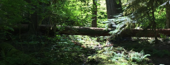 Colonial Creek Campground is one of Camping/Hiking in Western Washington.