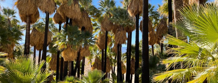 Coachella Valley Preserve is one of desert holiday.
