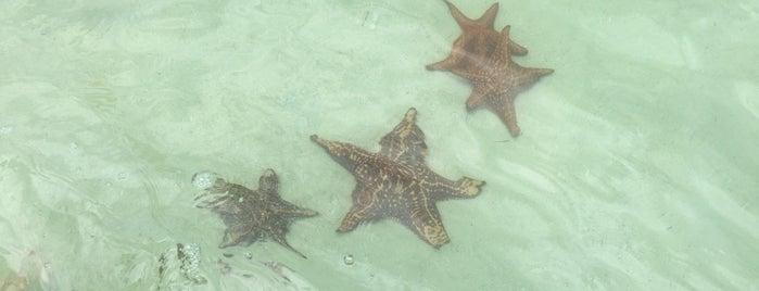 Starfish Point is one of Lugares favoritos de Amanda.