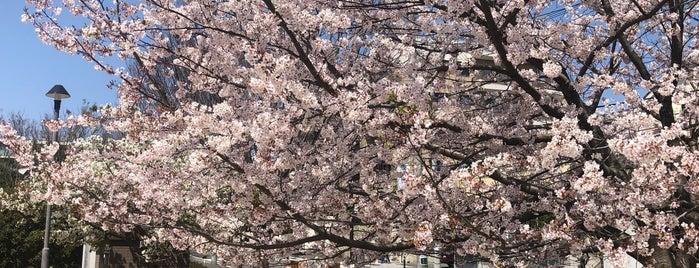 宮前美しの森公園 is one of Shinichi 님이 좋아한 장소.