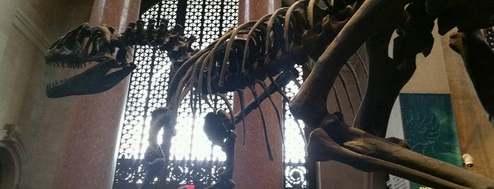 American Museum of Natural History is one of Tempat yang Disukai Christina.
