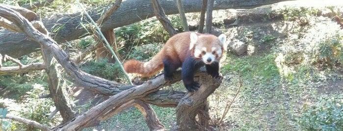 Bronx Zoo is one of Tempat yang Disukai Christina.