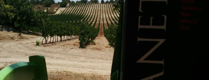 Planeta - Cantina Buonivini is one of Planeta's wines in the world.