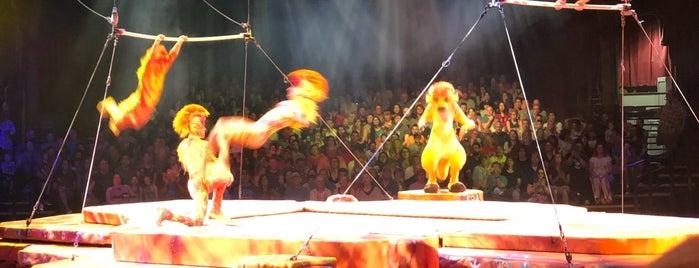 Festival of The Lion King is one of Tempat yang Disimpan Priscila.