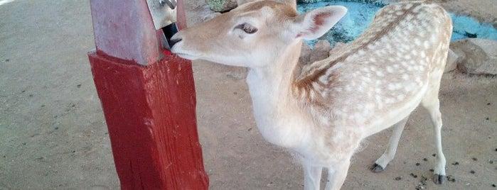 Bonnie Springs Petting Zoo is one of Lieux sauvegardés par Destiny.