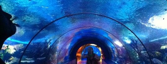 Antalya Aquarium is one of Sights of Antalya /Достопримечательности Анталии.