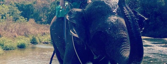 Puvara tour elephant camp is one of Lugares favoritos de Ladybug.