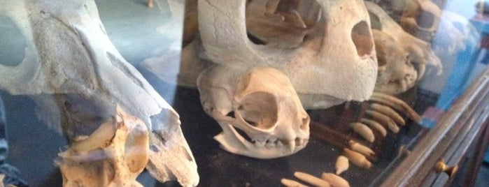 Morbid Anatomy Museum is one of Orte, die IrmaZandl gefallen.