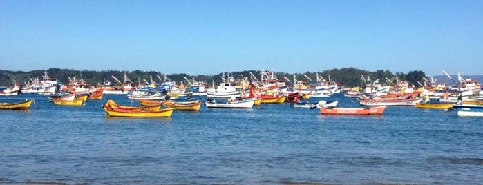 Caleta Tumbes is one of สถานที่ที่ Luis ถูกใจ.