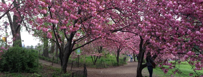 Central Park Cherry Blossoms is one of NYC to-do list.