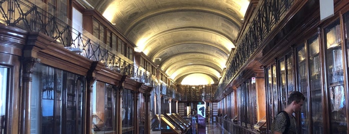 Biblioteca Reale is one of Torino.
