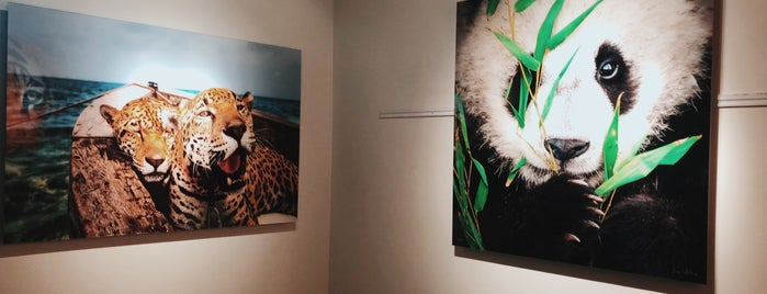 National Geographic | Fine Art Galleries is one of San Diego.