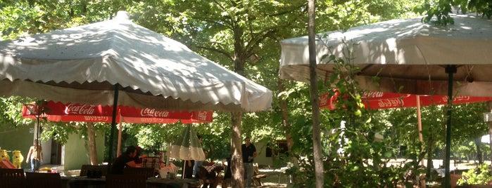 Yeşil Sera Cafe is one of Trakya.